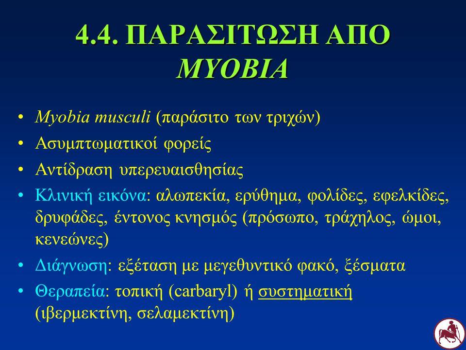 4.4. ΠΑΡΑΣΙΤΩΣΗ ΑΠΟ MYOBIA Myobia musculi (παράσιτο των τριχών) Ασυμπτωματικοί φορείς Αντίδραση υπερευαισθησίας Κλινική εικόνα: αλωπεκία, ερύθημα, φολ
