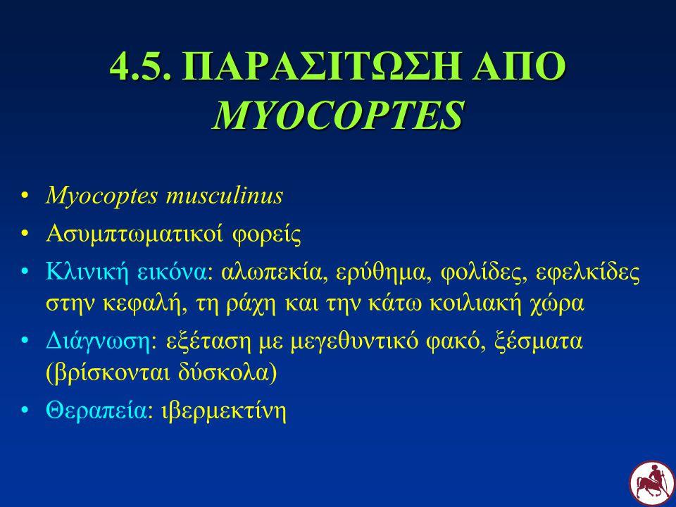 4.5. ΠΑΡΑΣΙΤΩΣΗ ΑΠΟ MYOCOPTES Myocoptes musculinus Ασυμπτωματικοί φορείς Κλινική εικόνα: αλωπεκία, ερύθημα, φολίδες, εφελκίδες στην κεφαλή, τη ράχη κα