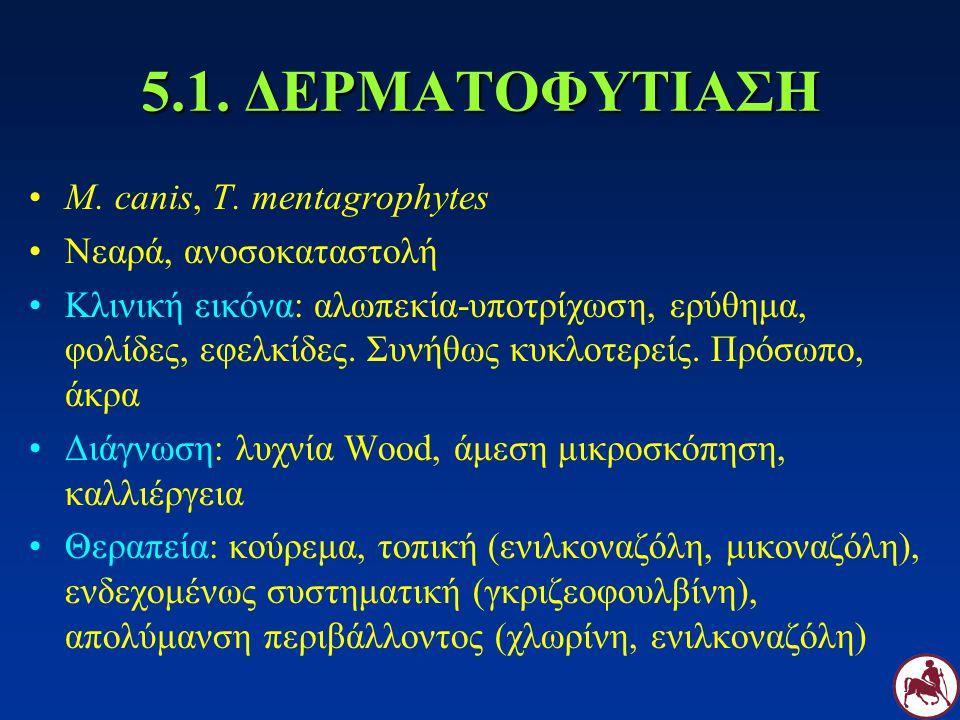 5.1. ΔΕΡΜΑΤΟΦΥΤΙΑΣΗ M. canis, T. mentagrophytes Νεαρά, ανοσοκαταστολή Κλινική εικόνα: αλωπεκία-υποτρίχωση, ερύθημα, φολίδες, εφελκίδες. Συνήθως κυκλοτ