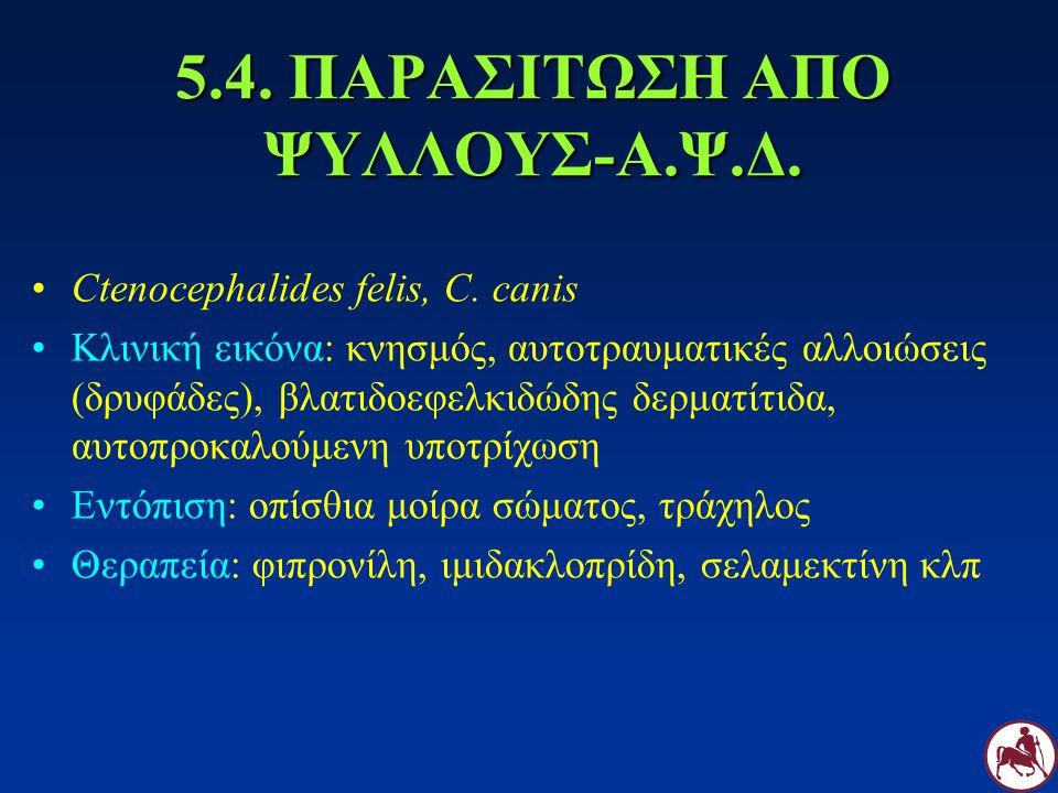 5.4. ΠΑΡΑΣΙΤΩΣΗ ΑΠΟ ΨΥΛΛΟΥΣ-Α.Ψ.Δ. Ctenocephalides felis, C. canis Κλινική εικόνα: κνησμός, αυτοτραυματικές αλλοιώσεις (δρυφάδες), βλατιδοεφελκιδώδης