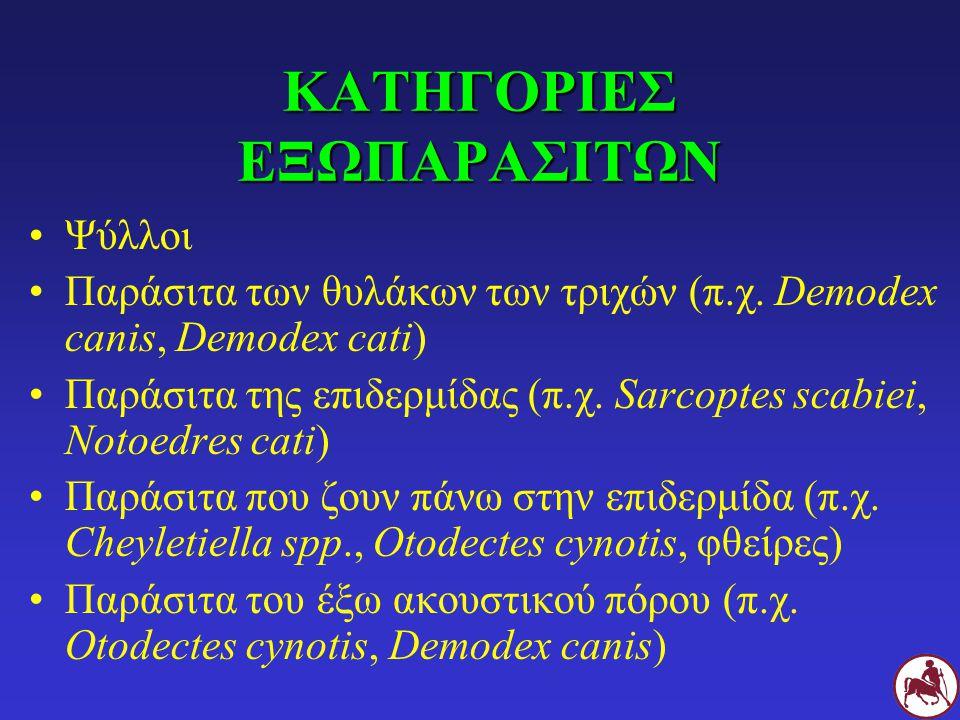 ΚΑΤΗΓΟΡΙΕΣ ΕΞΩΠΑΡΑΣΙΤΩΝ Ψύλλοι Παράσιτα των θυλάκων των τριχών (π.χ. Demodex canis, Demodex cati) Παράσιτα της επιδερμίδας (π.χ. Sarcoptes scabiei, No