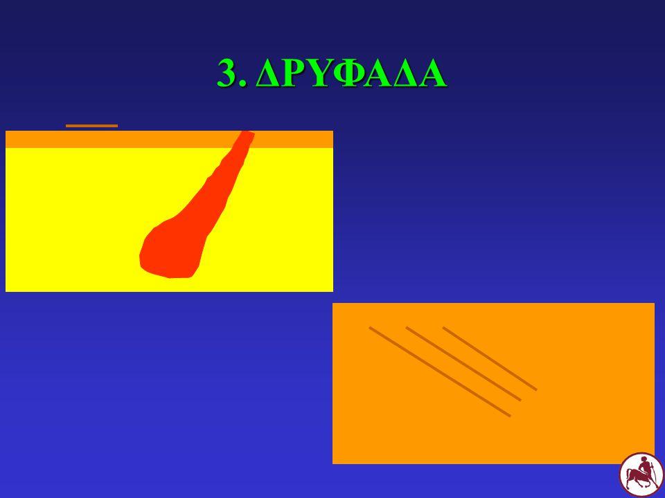 3. ΔΡΥΦΑΔΑ