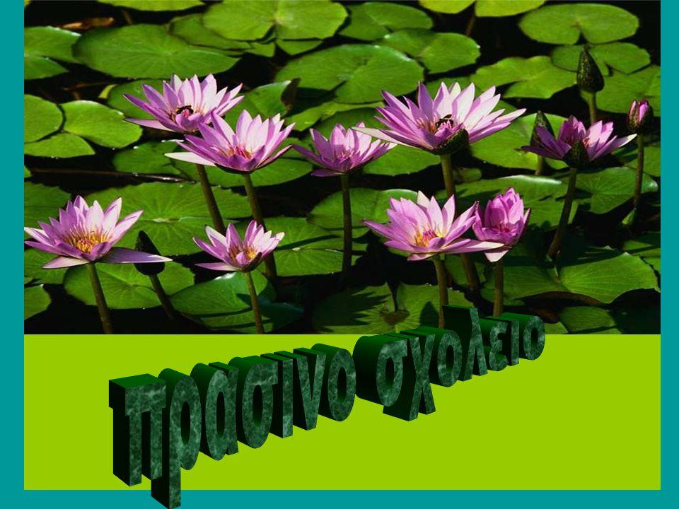 …με τα ακόλουθα φυτά στην αυλή του σχολείου Δενδρολίβανο Rosmarinus officinalisLabiateaeΔενδρολίβανο ΔυόσμοςMentha viridisLabiateae Βάλσαμο ή δυόσμος ή μέντα ΕλιάOlea europeaOleaceaeΕλιά Ιβίσκος Hibiscus rosa sinensisMalvaceaeΙβίσκος σινικός ΚαλλιστήμοναςCallistemon sp.MyrtaceaeΚαλλιστήμονας ΚάσσιαCassia floribundaLeguminoseaeΚάσσια ΚουτσουπιάCercis siliquastrumLeguminoseae Κουτσουπιά ή δένδρο του Ιούδα ΛαντάναLantana camaraVerbenaceaeΛαντάνα Λαντάνα νάνα Λαντάνα νάνα ΜυρτιάMyrtus communisMyrtaceaeΜυρτιά