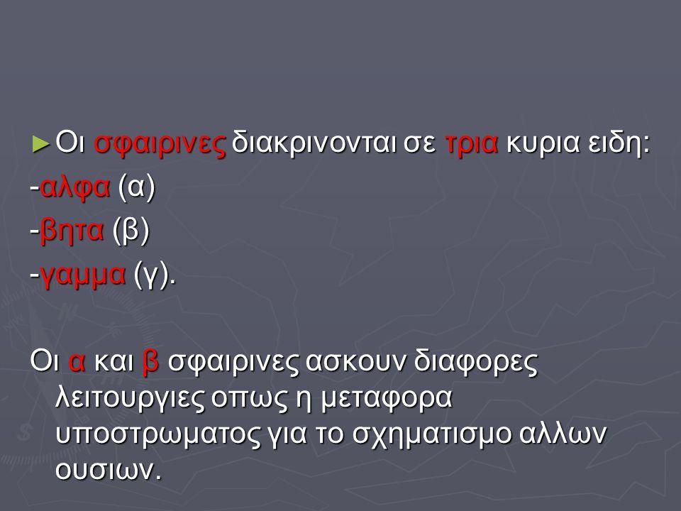 ► Οι σφαιρινες διακρινονται σε τρια κυρια ειδη: -αλφα (α) -βητα (β) -γαμμα (γ). Οι α και β σφαιρινες ασκουν διαφορες λειτουργιες οπως η μεταφορα υποστ