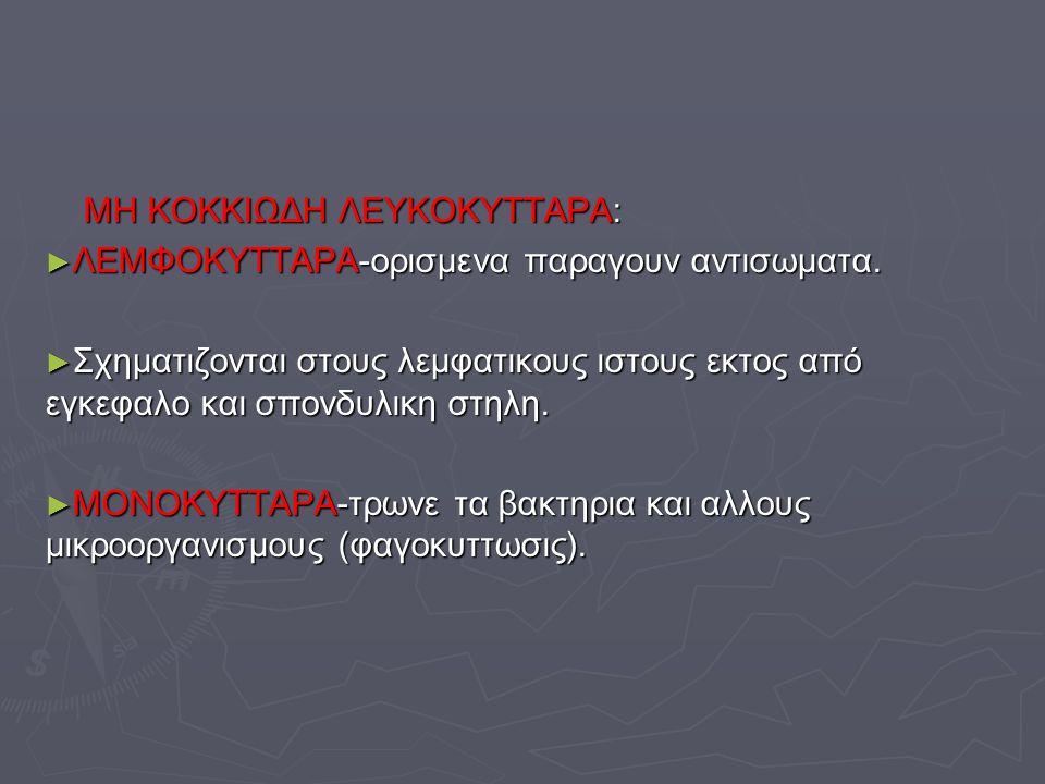 ΜΗ ΚΟΚΚΙΩΔΗ ΛΕΥΚΟΚΥΤΤΑΡΑ: ΜΗ ΚΟΚΚΙΩΔΗ ΛΕΥΚΟΚΥΤΤΑΡΑ: ► ΛΕΜΦΟΚΥΤΤΑΡΑ-ορισμενα παραγουν αντισωματα. ► Σχηματιζονται στους λεμφατικους ιστους εκτος από εγ