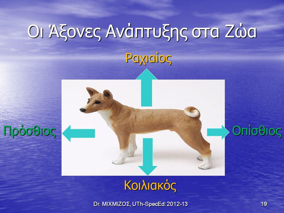 Οι Άξονες Ανάπτυξης στα Ζώα Ραχιαίος Ραχιαίος Πρόσθιος Οπίσθιος Κοιλιακός Κοιλιακός Dr. ΜΙΧΜΙΖΟΣ, UTh-SpecEd: 2012-13 19