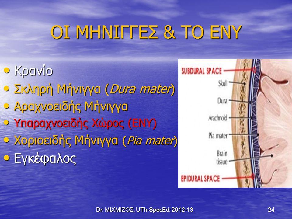 ΟΙ ΜΗΝΙΓΓΕΣ & ΤΟ ΕΝΥ Κρανίο Κρανίο Σκληρή Μήνιγγα (Dura mater) Σκληρή Μήνιγγα (Dura mater) Αραχνοειδής Μήνιγγα Αραχνοειδής Μήνιγγα Υπαραχνοειδής Χώρος