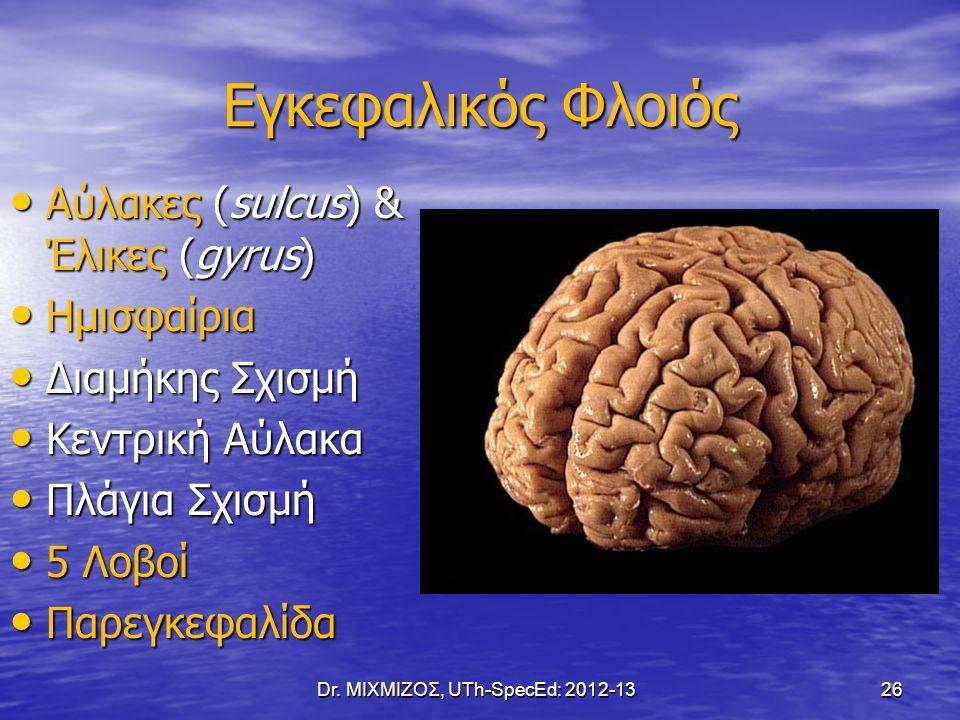 Εγκεφαλικός Φλοιός Αύλακες (sulcus) & Έλικες (gyrus) Αύλακες (sulcus) & Έλικες (gyrus) Ημισφαίρια Ημισφαίρια Διαμήκης Σχισμή Διαμήκης Σχισμή Κεντρική