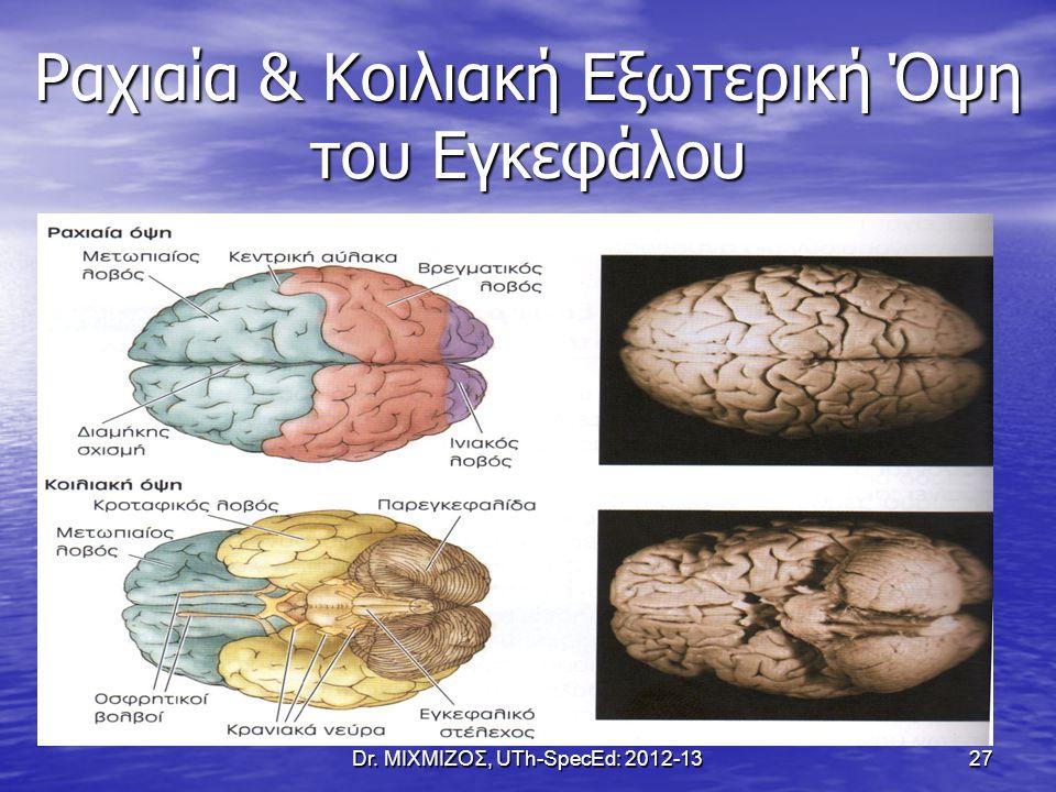 Ραχιαία & Κοιλιακή Εξωτερική Όψη του Εγκεφάλου Dr. ΜΙΧΜΙΖΟΣ, UTh-SpecEd: 2012-1327