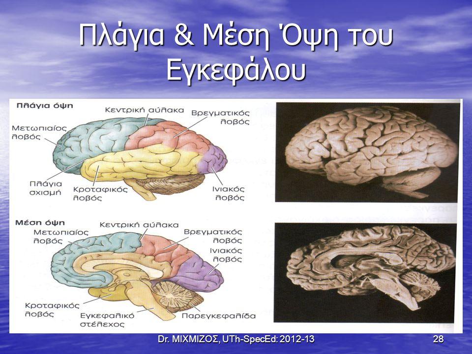 Πλάγια & Μέση Όψη του Εγκεφάλου Dr. ΜΙΧΜΙΖΟΣ, UTh-SpecEd: 2012-1328
