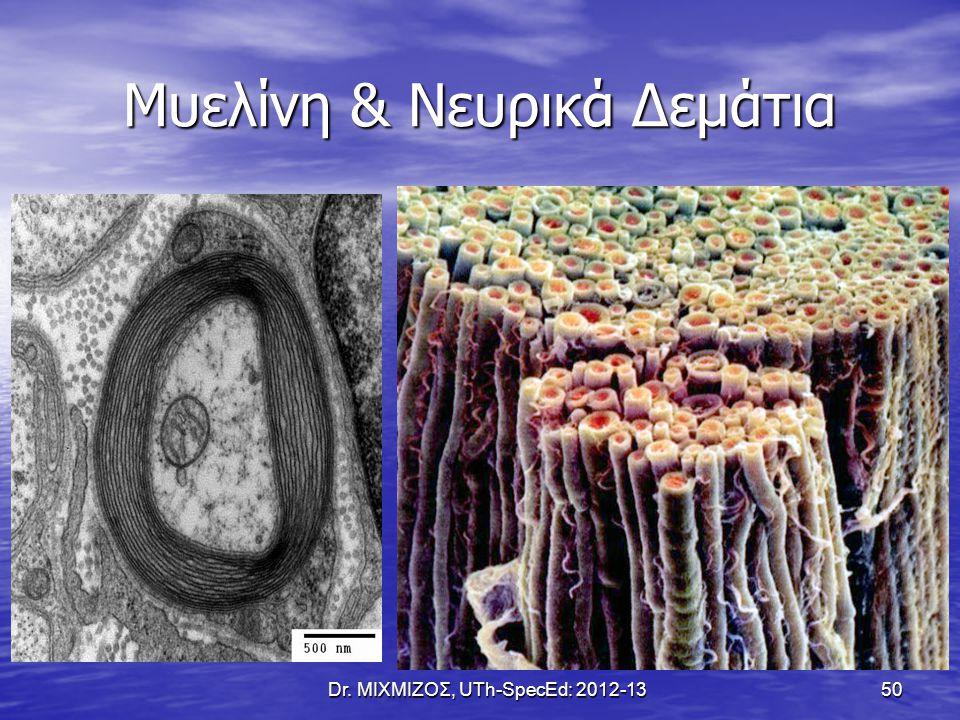 Μυελίνη & Νευρικά Δεμάτια Dr. ΜΙΧΜΙΖΟΣ, UTh-SpecEd: 2012-13 50