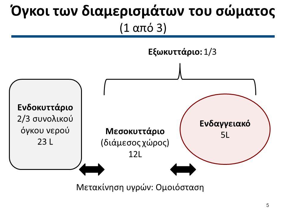 Όγκοι των διαμερισμάτων του σώματος (1 από 3) Ενδοκυττάριο 2/3 συνολικού όγκου νερού 23 L Μεσοκυττάριο (διάμεσος χώρος) 12L Ενδαγγειακό 5L Εξωκυττάριο
