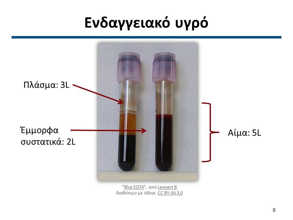 """Ενδαγγειακό υγρό """"Blut-EDTA"""", από Lennert B διαθέσιμο με άδεια CC BY-SA 3.0Blut-EDTALennert BCC BY-SA 3.0 Πλάσμα: 3L Έμμορφα συστατικά: 2L Αίμα: 5L 8"""