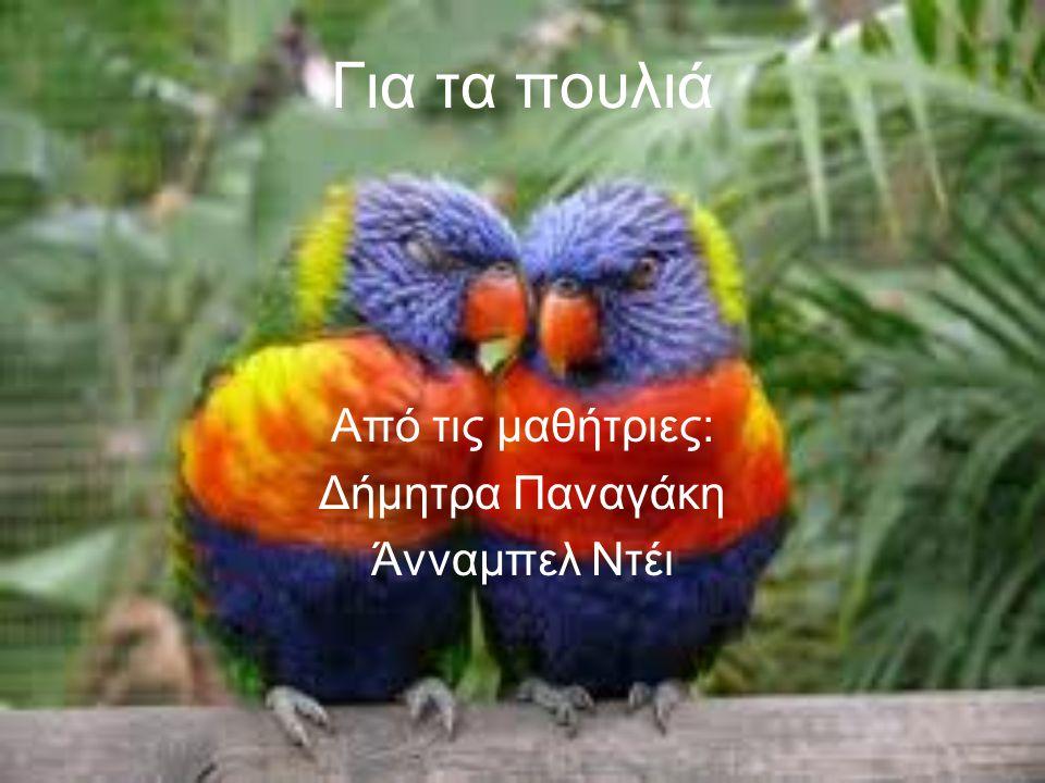 Για τα πουλιά Από τις μαθήτριες: Δήμητρα Παναγάκη Άνναμπελ Ντέι