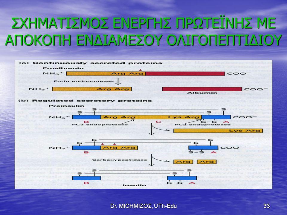 Dr. ΜΙCHΜΙΖΟΣ, UTh-Edu33 ΣΧΗΜΑΤΙΣΜΟΣ ΕΝΕΡΓΗΣ ΠΡΩΤΕΪΝΗΣ ΜΕ ΑΠΟΚΟΠΗ ΕΝΔΙΑΜΕΣΟΥ ΟΛΙΓΟΠΕΠΤΙΔΙΟΥ