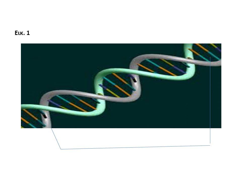 Εισαγωγή στους Γενετικά Τροποποιημένους Οργανισμούς Τι είναι οι Γενετικά Τροποποιημένοι Οργανισμοί; Τι είναι τα Γενετικά Τροποποιημένα Τρόφιμα; Υπάρχει κίνδυνος από την κατανάλωση τους; Τι είναι οι Γενετικά Τροποποιημένοι Οργανισμοί; Τι είναι τα Γενετικά Τροποποιημένα Τρόφιμα; Υπάρχει κίνδυνος από την κατανάλωση τους;