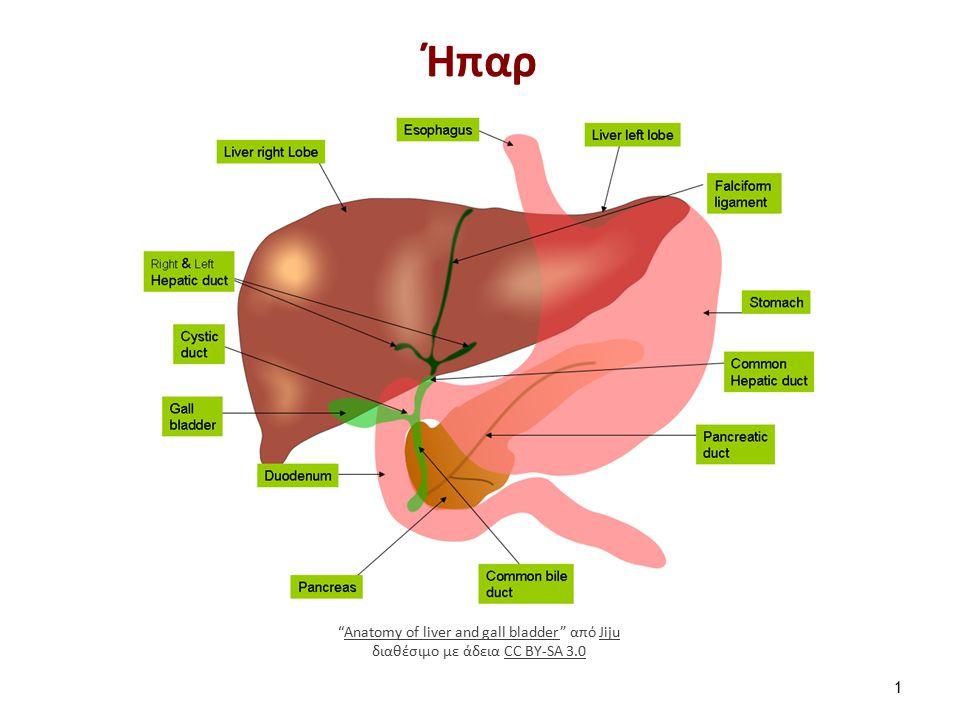 """Ήπαρ 1 """"Anatomy of liver and gall bladder"""" από Jiju διαθέσιμο με άδεια CC BY-SA 3.0Anatomy of liver and gall bladderJijuCC BY-SA 3.0"""
