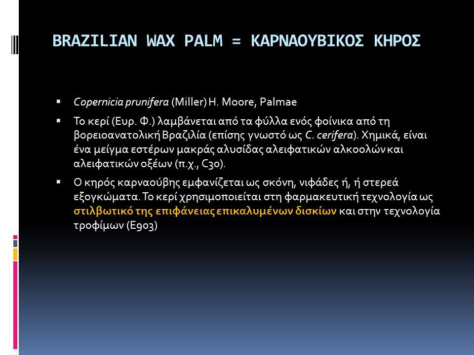 BRAZILIAN WAX PALM = ΚΑΡΝΑΟΥΒΙΚΟΣ ΚΗΡΟΣ  Copernicia prunifera (Miller) H. Moore, Palmae  Το κερί (Eυρ. Φ.) λαμβάνεται από τα φύλλα ενός φοίνικα από