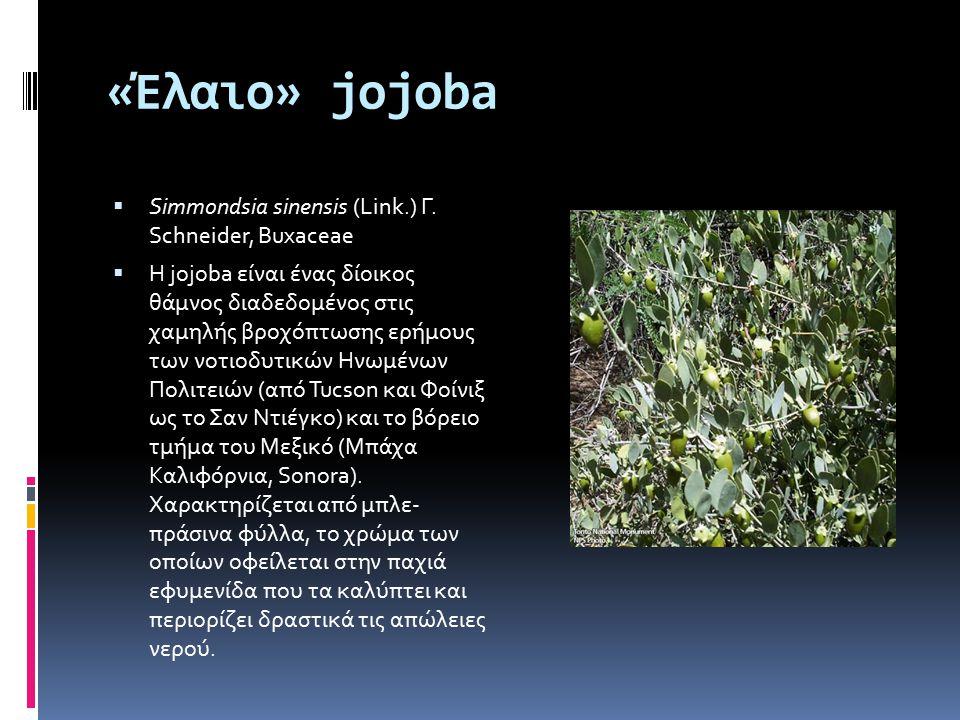«Έλαιο» jojoba  Simmondsia sinensis (Link.) Γ. Schneider, Buxaceae  Η jojoba είναι ένας δίοικος θάμνος διαδεδομένος στις χαμηλής βροχόπτωσης ερήμους