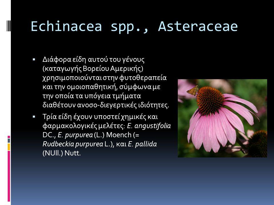 Echinacea spp., Asteraceae  Διάφορα είδη αυτού του γένους (καταγωγής Βορείου Αμερικής) χρησιμοποιούνται στην φυτοθεραπεία και την ομοιοπαθητική, σύμφ