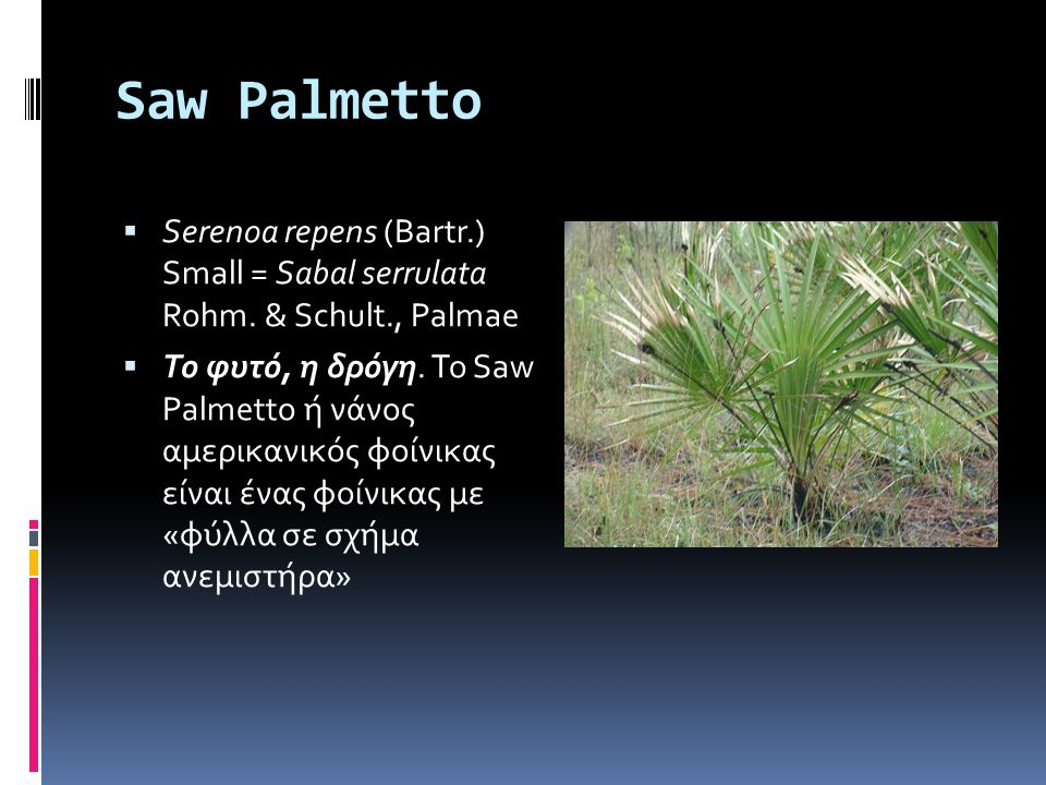 Saw Palmettο  Serenoa repens (Bartr.) Small = Sabal serrulata Rohm. & Schult., Palmae  To φυτό, η δρόγη. Το Saw Palmetto ή νάνος αμερικανικός φοίνικ