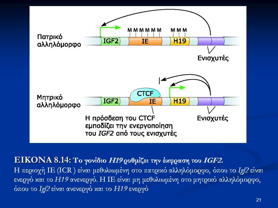 21 ΕΙΚΟΝΑ 8.14: ΕΙΚΟΝΑ 8.14: Το γονίδιο Η19 ρυθμίζει την έκφραση του IGF2. Η περιοχή ΙΕ (ICR ) είναι μεθυλιωμένη στο πατρικό αλληλόμορφο, όπου το Igf2