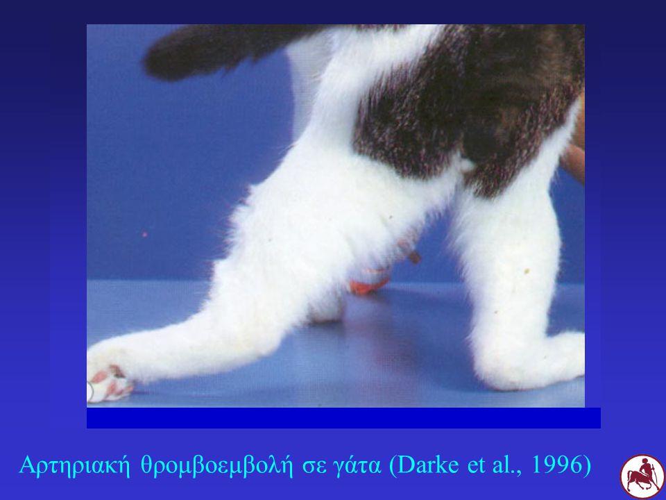 Αρτηριακή θρομβοεμβολή σε γάτα (Darke et al., 1996)