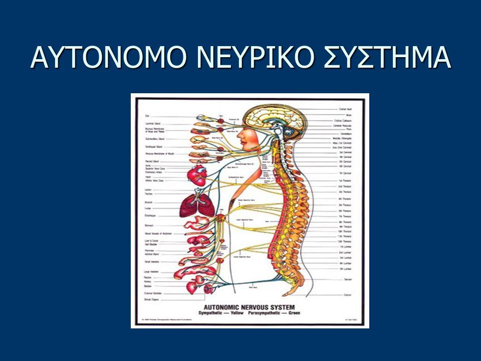ΚΑΤΗΓΟΡΙΕΣ ΝΕΥΡΙΚΟΥ ΣΥΣΤΗΜΑΤΟΣ Το νευρικό σύστημα χωρίζεται στα: Το νευρικό σύστημα χωρίζεται στα: α) Αυτόνομο Νευρικό Σύστημα (ΑΝΣ) β) Σωματικό Νευρικό Σύστημα (ΣΝΣ)