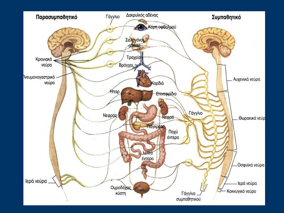 Το παρασυμπαθητικό σύστημα ονομάζεται έτσι, διότι επιτελεί τις ακριβώς αντίθετες λειτουργίες από αυτές του συμπαθητικού.