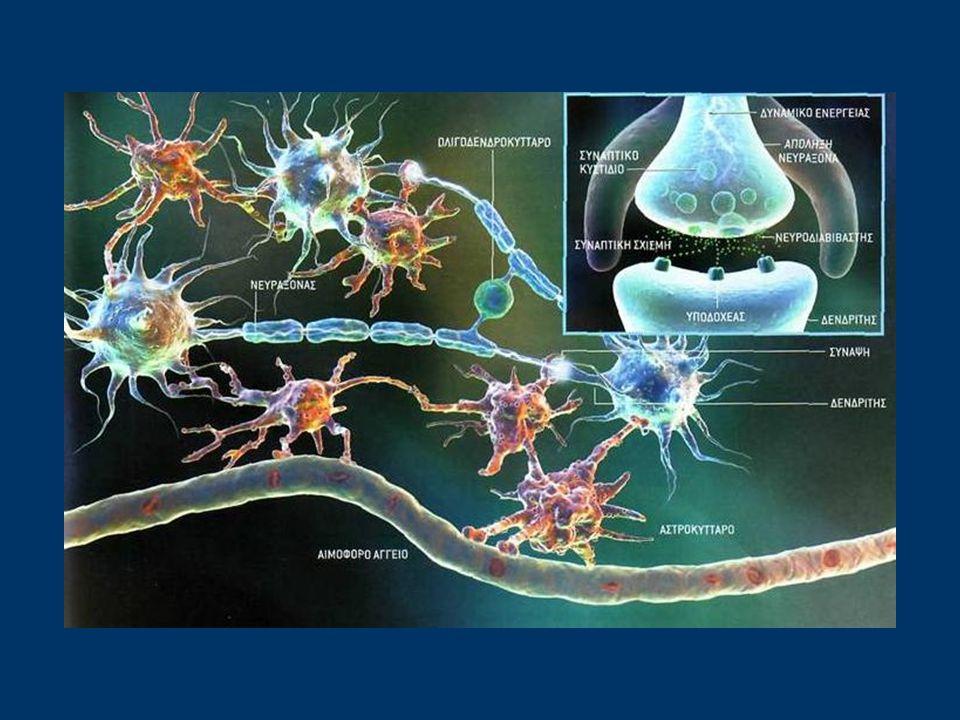 Στην πορεία τους αυτή από νευρώνα σε νευρώνα, τα νευρικά ερεθίσματα, διασχίζουν μικροσκοπικά κενά, που ονομάζονται συνάψεις και βρίσκονται ανάμεσα στα διαδοχικά νευρικά κύτταρα.