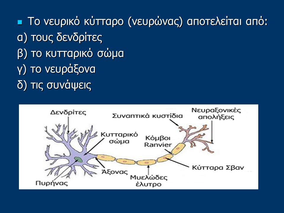 Το νευρικό κύτταρο (νευρώνας) αποτελείται από: Το νευρικό κύτταρο (νευρώνας) αποτελείται από: α) τους δενδρίτες β) το κυτταρικό σώμα γ) το νευράξονα δ) τις συνάψεις