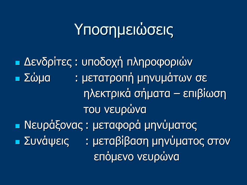 Υποσημειώσεις Δενδρίτες : υποδοχή πληροφοριών Δενδρίτες : υποδοχή πληροφοριών Σώμα : μετατροπή μηνυμάτων σε Σώμα : μετατροπή μηνυμάτων σε ηλεκτρικά σήματα – επιβίωση ηλεκτρικά σήματα – επιβίωση του νευρώνα του νευρώνα Νευράξονας : μεταφορά μηνύματος Νευράξονας : μεταφορά μηνύματος Συνάψεις : μεταβίβαση μηνύματος στον Συνάψεις : μεταβίβαση μηνύματος στον επόμενο νευρώνα επόμενο νευρώνα