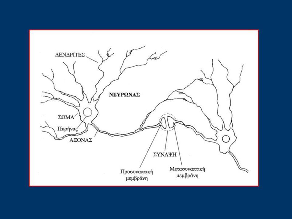 ΑΙΣΘΗΤΗΡΙΟΙ ΝΕΥΡΩΝΕΣ Αισθητήριοι είναι οι νευρώνες που υποδέχονται τα εξωτερικά ερεθίσματα και τα διαβιβάζουν μέσω του νωτιαίου μυελού στον εγκέφαλο.