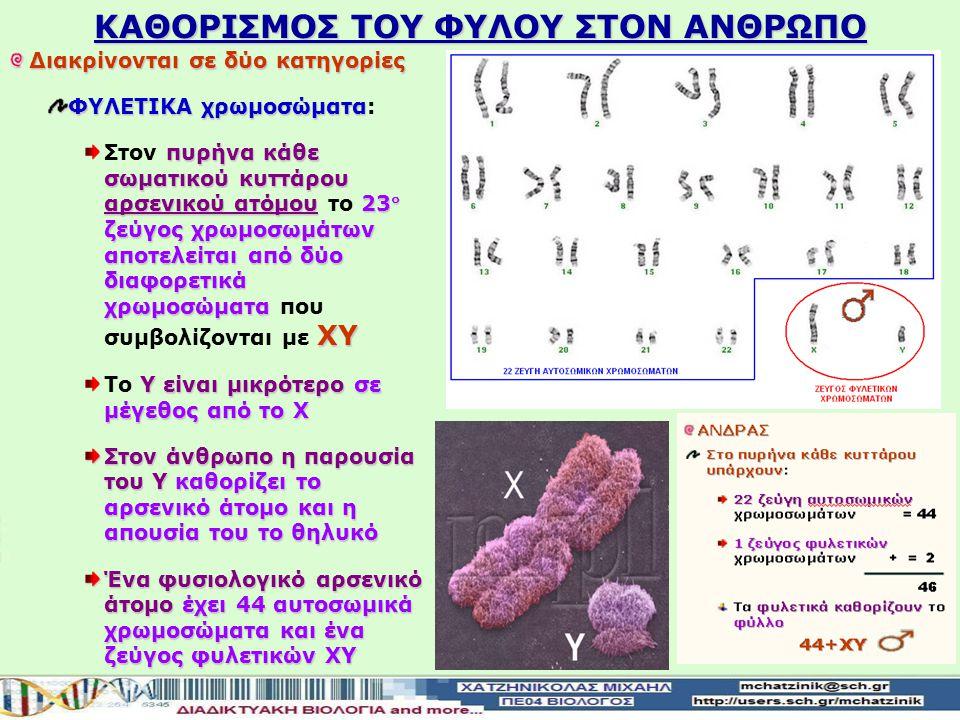 Διακρίνονται σε δύο κατηγορίες ΦΥΛΕΤΙΚΑ χρωμοσώματα ΦΥΛΕΤΙΚΑ χρωμοσώματα: πυρήνα κάθε σωματικού κυττάρου θηλυκού ατόμου23 ζεύγος χρωμοσωμάτων αποτελε