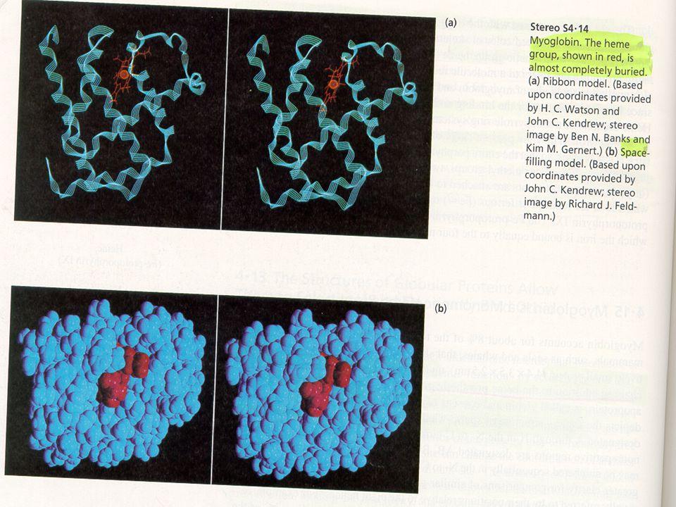 Σχέση βιταμίνης Β 12 και φυλλικού οξέος  Η έλλειψη φυλλικού οξέος προκαλεί μακροκυτταρική, μεγαλοβλαστική αναιμία πανομοιότυπη σε εμφάνιση με την αναιμία που προκαλείται από έλλειψη βιταμίνης Β 12.