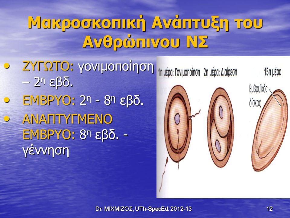 Dr. ΜΙΧΜΙΖΟΣ, UTh-SpecEd: 2012-13 12 Μακροσκοπική Ανάπτυξη του Ανθρώπινου ΝΣ ΖΥΓΩΤΟ: γονιμοποίηση – 2 η εβδ. ΖΥΓΩΤΟ: γονιμοποίηση – 2 η εβδ. ΕΜΒΡΥΟ: 2
