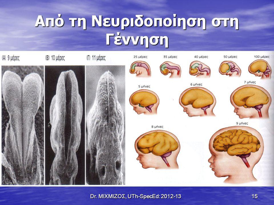Dr. ΜΙΧΜΙΖΟΣ, UTh-SpecEd: 2012-13 15 Από τη Νευριδοποίηση στη Γέννηση