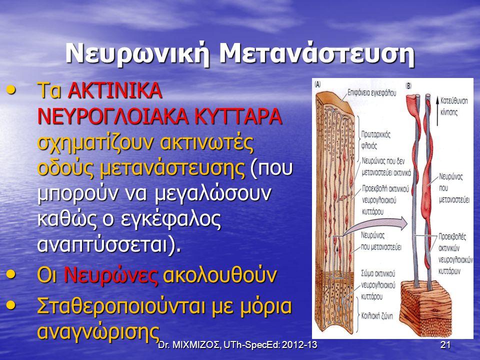 Dr. ΜΙΧΜΙΖΟΣ, UTh-SpecEd: 2012-13 21 Νευρωνική Μετανάστευση Τα ΑΚΤΙΝΙΚΑ ΝΕΥΡΟΓΛΟΙΑΚΑ ΚΥΤΤΑΡΑ σχηματίζουν ακτινωτές οδούς μετανάστευσης (που μπορούν να