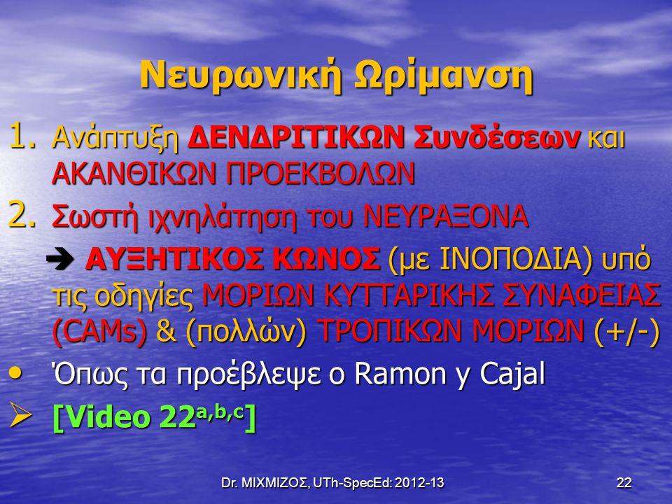 Dr. ΜΙΧΜΙΖΟΣ, UTh-SpecEd: 2012-13 22 Νευρωνική Ωρίμανση 1. Ανάπτυξη ΔΕΝΔΡΙΤΙΚΩΝ Συνδέσεων και ΑΚΑΝΘΙΚΩΝ ΠΡΟΕΚΒΟΛΩΝ 2. Σωστή ιχνηλάτηση του ΝΕΥΡΑΞΟΝΑ 