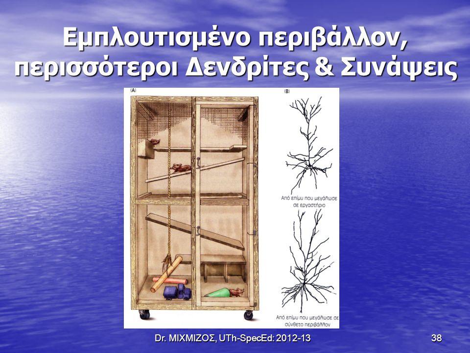 Dr. ΜΙΧΜΙΖΟΣ, UTh-SpecEd: 2012-13 38 Εμπλουτισμένο περιβάλλον, περισσότεροι Δενδρίτες & Συνάψεις
