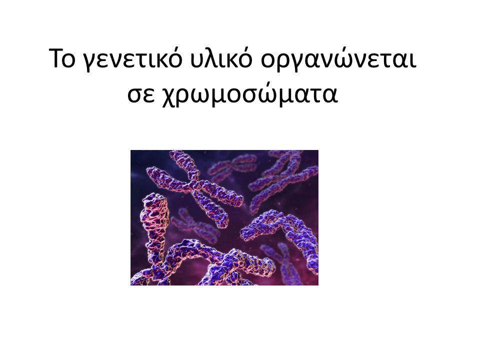Το γενετικό υλικό οργανώνεται σε χρωμοσώματα