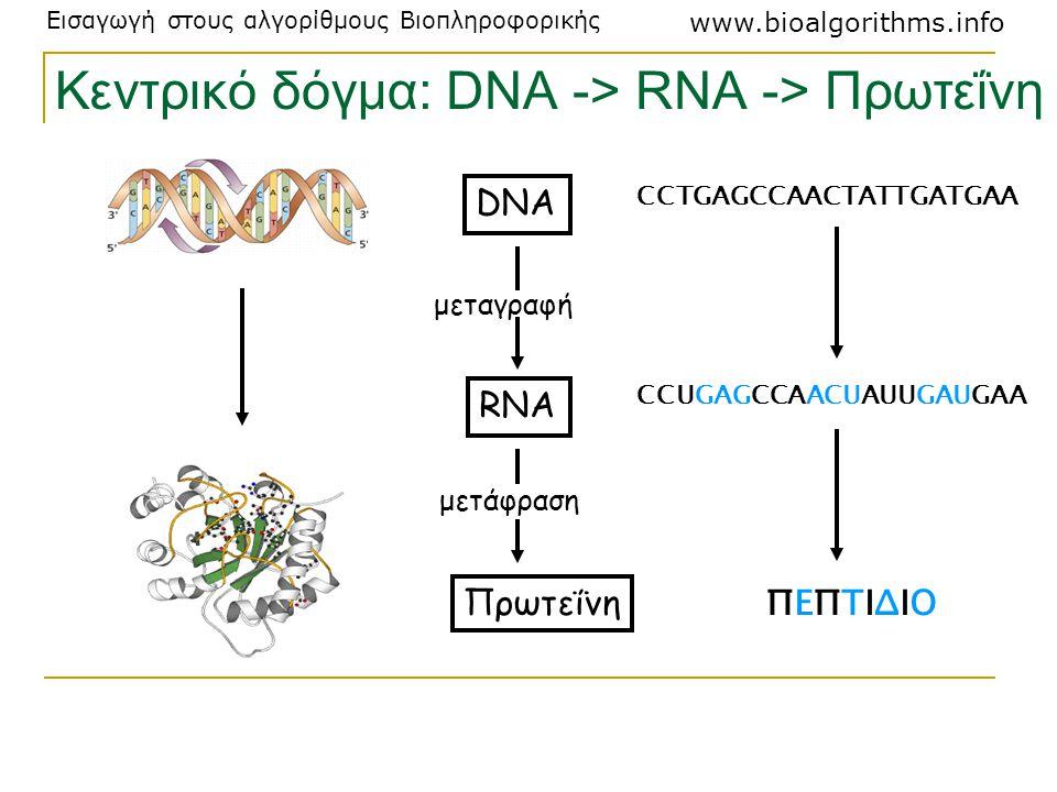 Εισαγωγή στους αλγορίθμους Βιοπληροφορικής www.bioalgorithms.info Κεντρικό δόγμα: DNA -> RNA -> Πρωτεΐνη Πρωτεΐνη RNA DNA μεταγραφή μετάφραση CCTGAGCC
