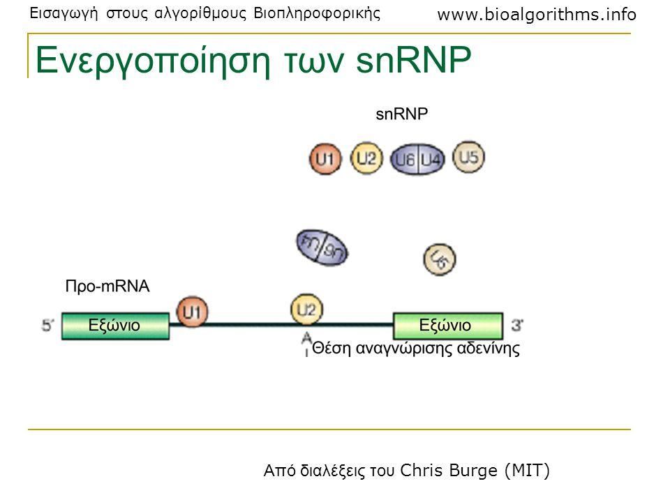Εισαγωγή στους αλγορίθμους Βιοπληροφορικής www.bioalgorithms.info Ενεργοποίηση των snRNP Από διαλέξεις του Chris Burge (MIT)