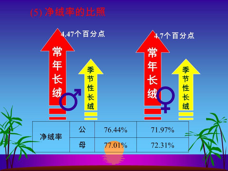 (5) 净绒率的比照 4.47 个百分点 4.7 个百分点 ♂♀ 净绒率 公 76.44%71.97% 母 77.01%72.31%