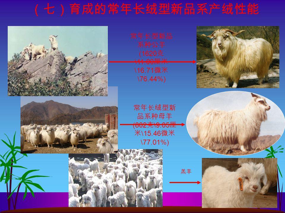 常年长型新品 系种公羊 (1620 克 \11.00 厘米 \16.71 微米 \76.44%) 常年长绒型新 品系种母羊 (802 克 \9.05 厘 米 \15.46 微米 \77.01%) 羔羊 (七)育成的常年长绒型新品系产绒性能