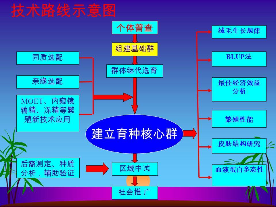 5 首次利用社 会化联合育种机 制培育新品系