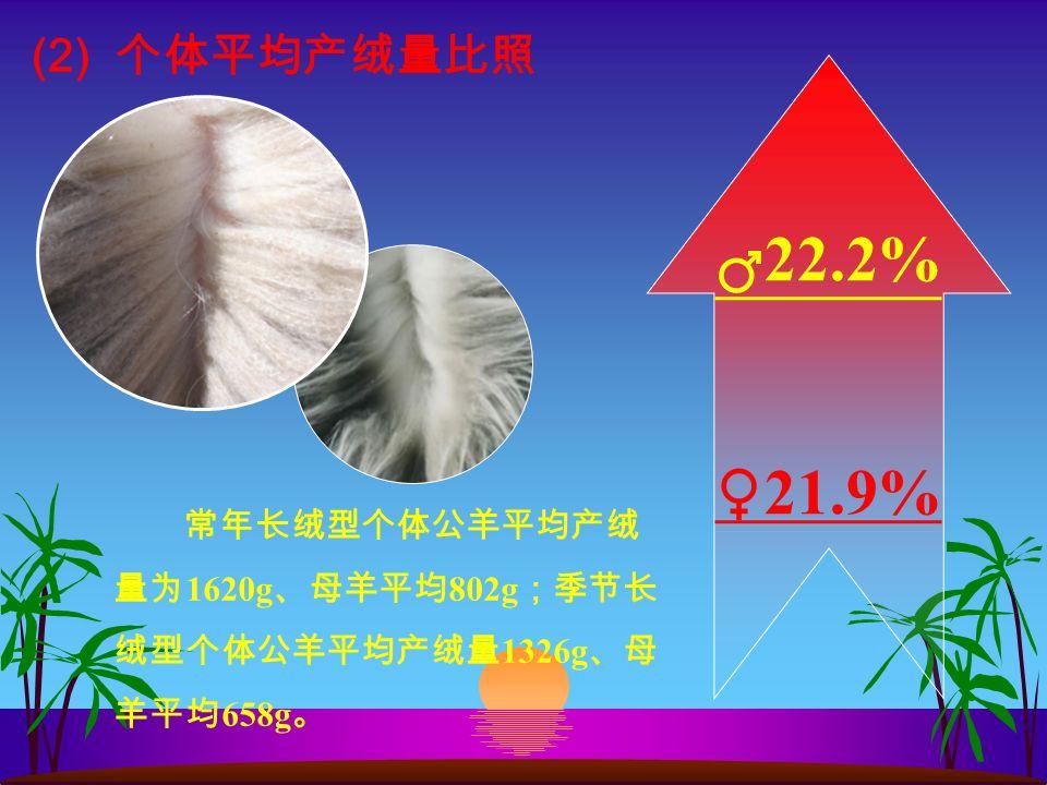 (2) 个体平均产绒量比照 常年长绒型个体公羊平均产绒 量为 1620g 、母羊平均 802g ;季节长 绒型个体公羊平均产绒量 1326g 、母 羊平均 658g 。