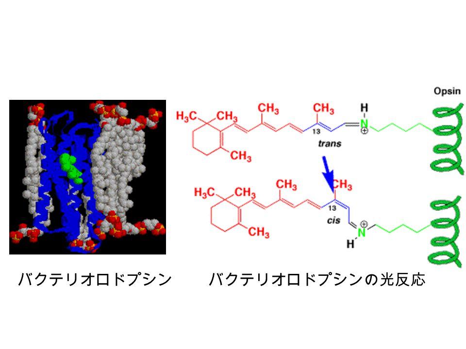 バクテリオロドプシンバクテリオロドプシンの光反応