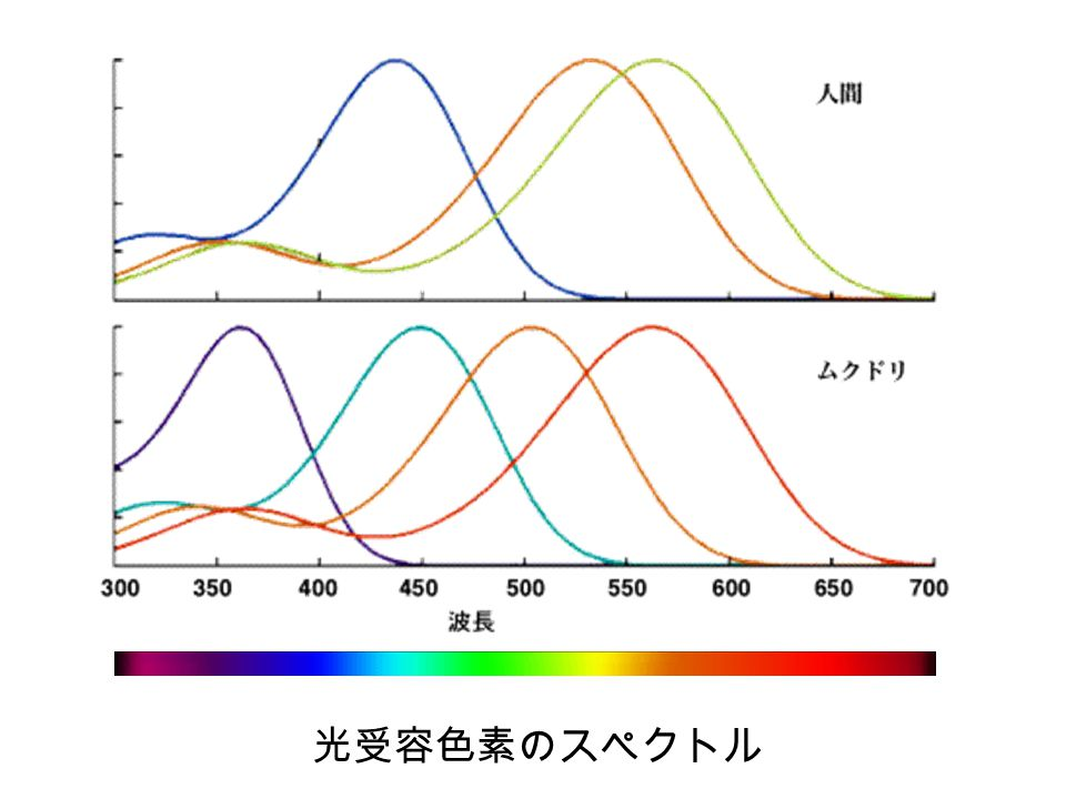 14 光の性質 @ 波動性 ( 電磁波 ) 回折,干渉 など @ 粒子性 光電効果,コンプトン効果 など ・・・・・振動数 ( 波長の逆数 ) に比例するエネルギー を持つ粒子 ヤングの干渉実験 2つのスリットに 光を通過させる 左:粒子性を仮定 右:波動性を仮定 すでに16名が筆答免除で決定済み