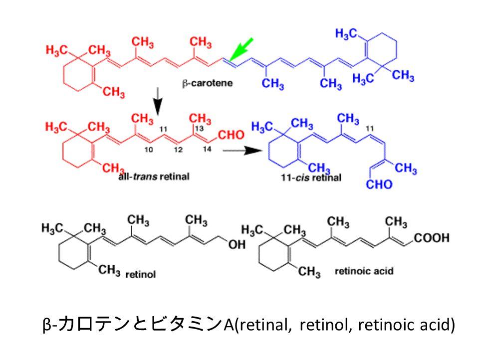 β- カロテンとビタミン A(retinal, retinol, retinoic acid)